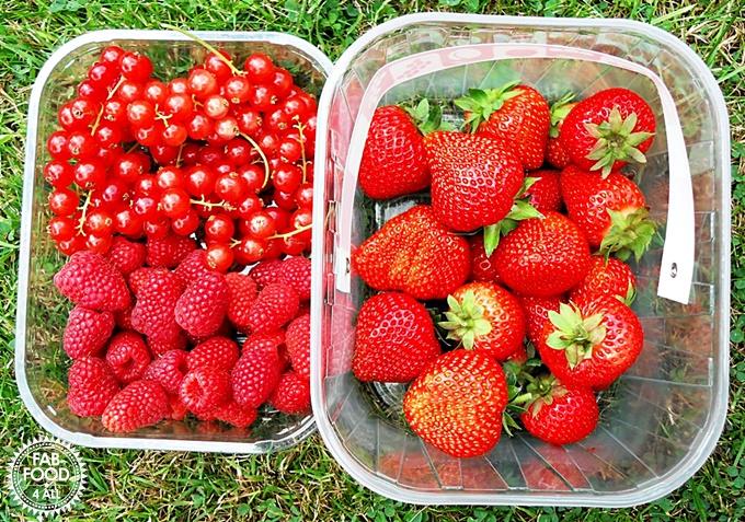 Punnets of Strawberries, Raspberries & Redcurrants.