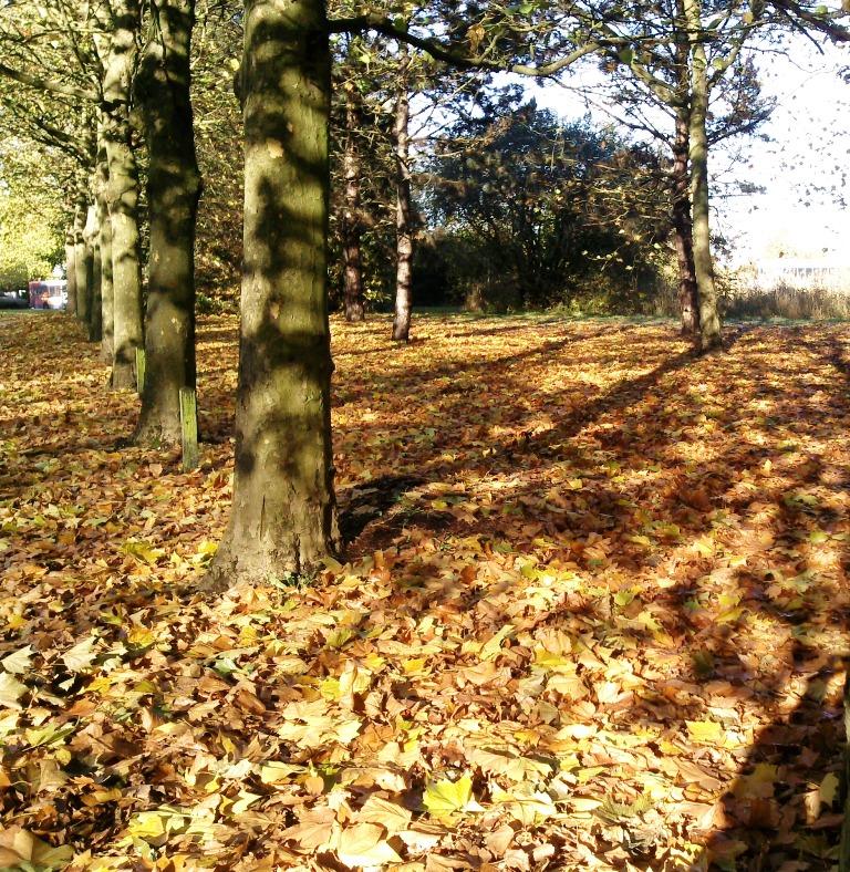 Auttumn leaves, trees