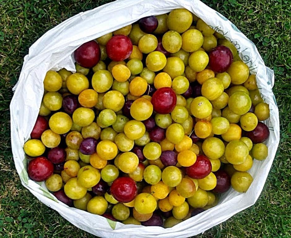 Foraged, plums, jam, preserve, conserve, seasonal, Mirabelles,