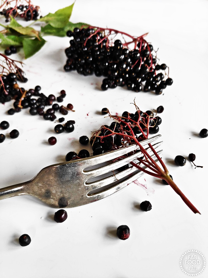Using a fork to remove elderberries from a stem.